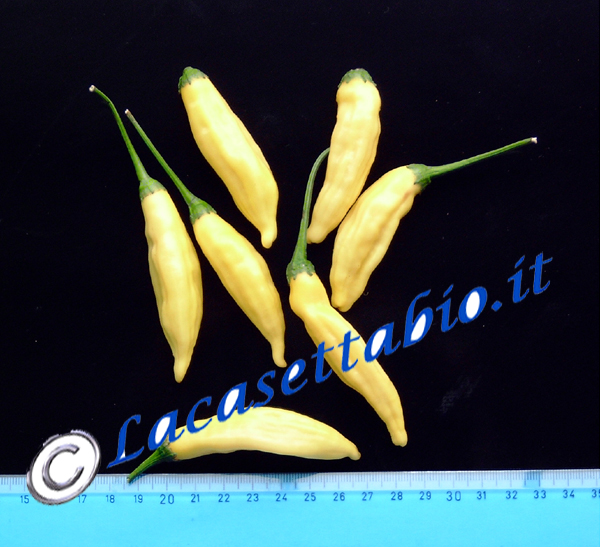 Peperoncino piccante Hot lemon